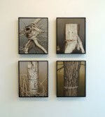 Four studies - Time, Stumpy, Birch, Marked Tree, 2011 by Andrew Browne