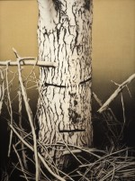 Visitation #7 (birch-face), 2009 by Andrew Browne