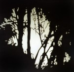 Light through foliage, 2001 by Andrew Browne