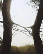 Two trees, 2009 by Andrew Browne